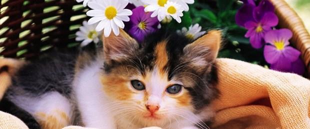 Bazı çiçekler evcil hayvanları zehirleyebilir mi.jpg