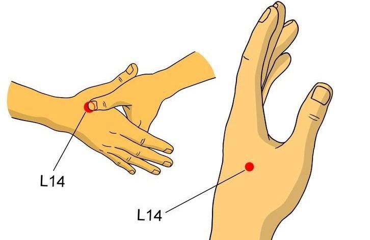 Akupunktur'un ağrı merkezlerinden biri olarak tanımlanan L 14 noktası.