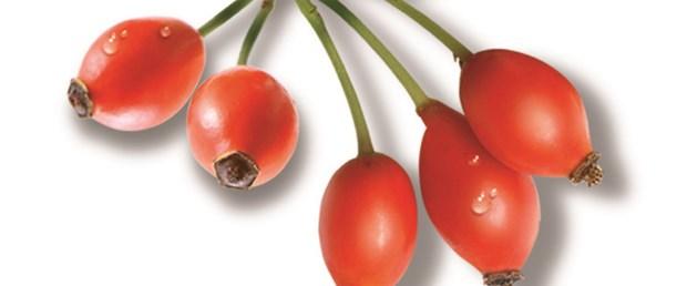 C vitamini deposu: Kuşburnu
