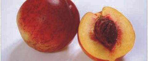 Düşük kalorili antioksidan kaynağı