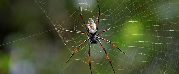Felç tedavisine örümcek zehri.jpg