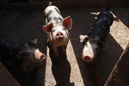 banned pork for porksentatives
