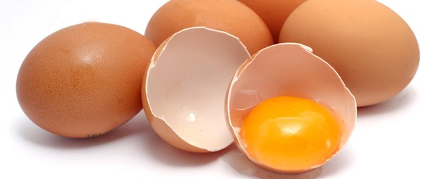 yumurta kabuk.jpg