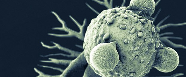 kanser hücresi 4.jpg