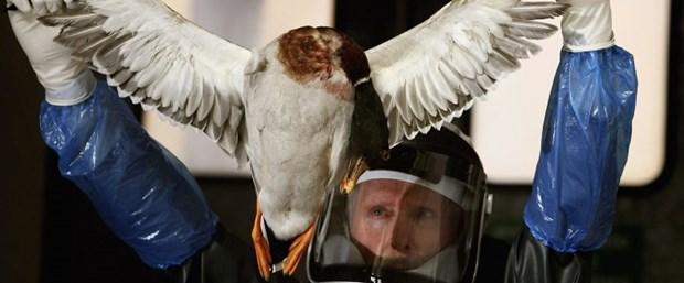 Kuş gribi Türkiye'ye sıçrar mı.jpg