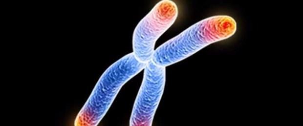 telomer-nedir-ve-yaslanmayi-nasil-durdurur-bilimfilicom.jpg