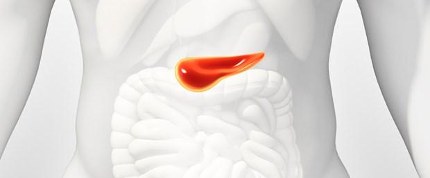 Pankreas.jpg