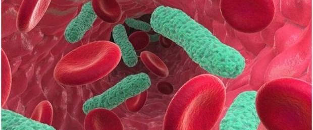 _77063561_c0115556-bacterial_blood_in.jpg