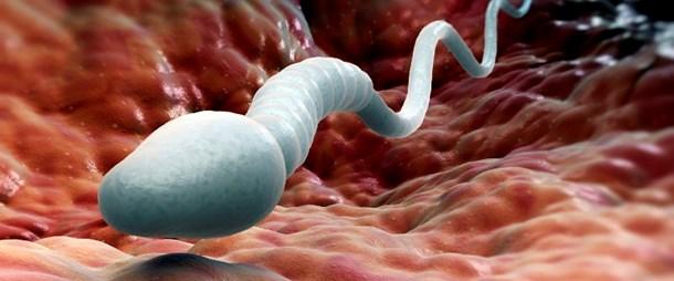 вагины со спермой фото № 1645 бесплатно
