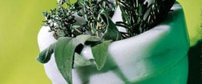 Tıbbi bitkiler aktarda satılamayacak