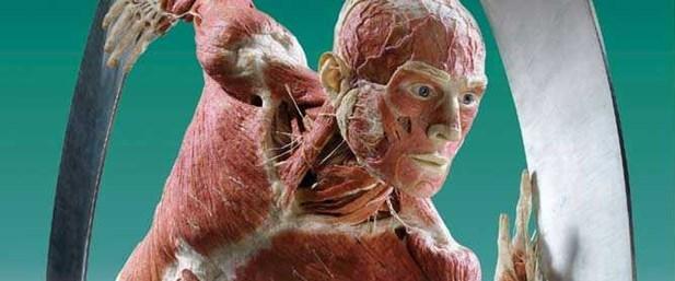 Tıp fakültelerindeki kadavra sorununa plastinasyon çözümü.jpg