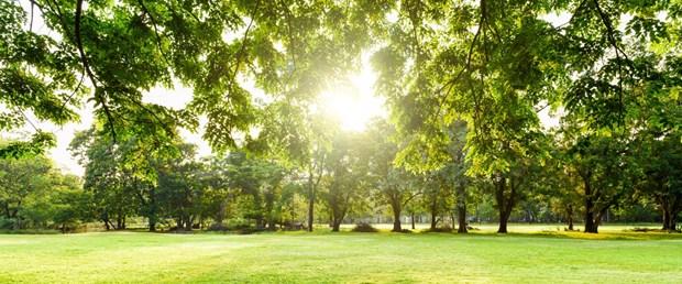ağaç.jpg