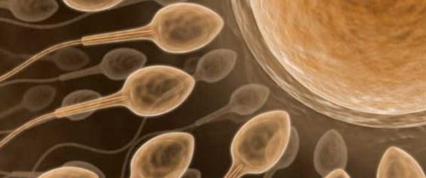 Yapay sperm çözüm olur mu?