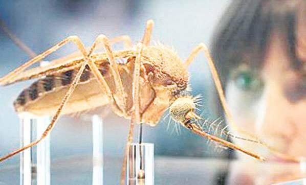 Zika virüsü klonlandı