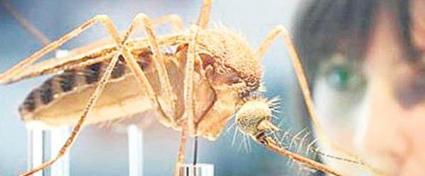 Zika virüsü klonlandı.Jpeg