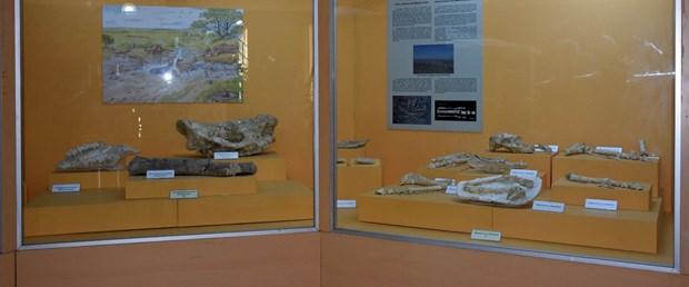 arkeoloji-muzesi-9-milyon-yil-oncesine-isik-tutuyor_1506_dhaphoto2.jpg