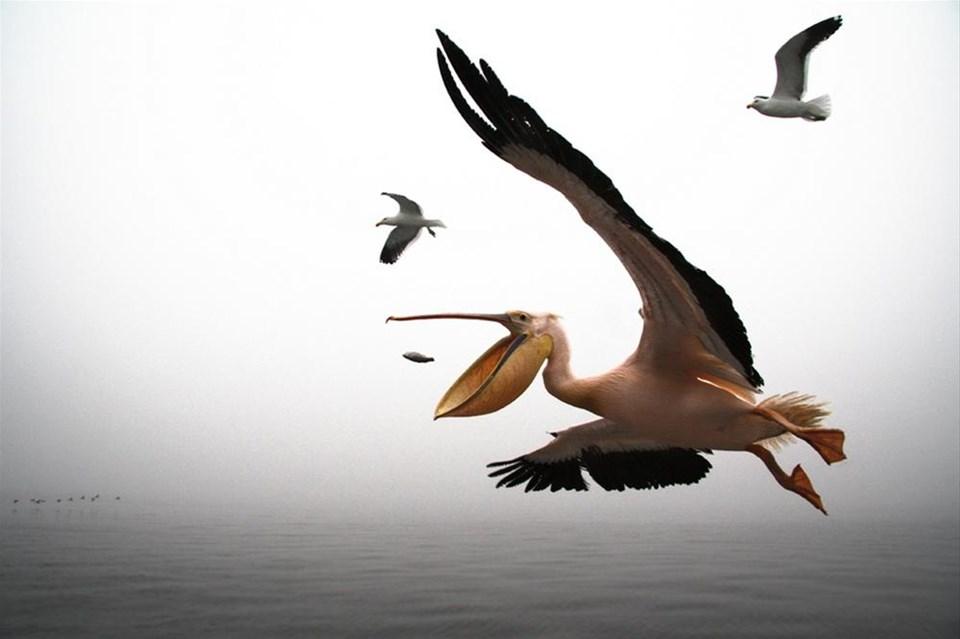 National Geographic Fotoğraf Yarışması 2012