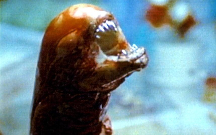 1. Alien