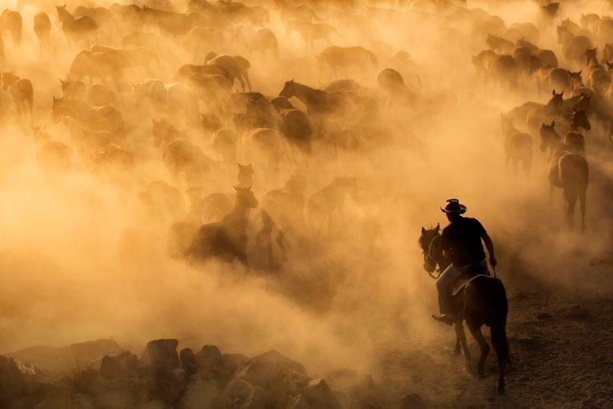 kapadokya, güzel atlar ülkesi, güzel atlar diyarı, kapadokya yılkı atları, türkiye yılkı atları