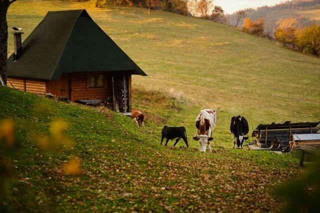 yürüyüş yolu, vilsonovo, sonbahar, saraybosna, doğa, Bosna Hersek