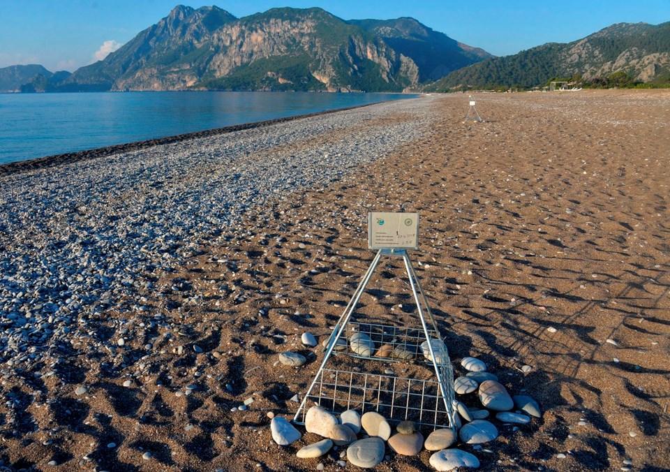 caretta caretta, caretta mevsimi, caretta kaplumbağaları denize ne zaman