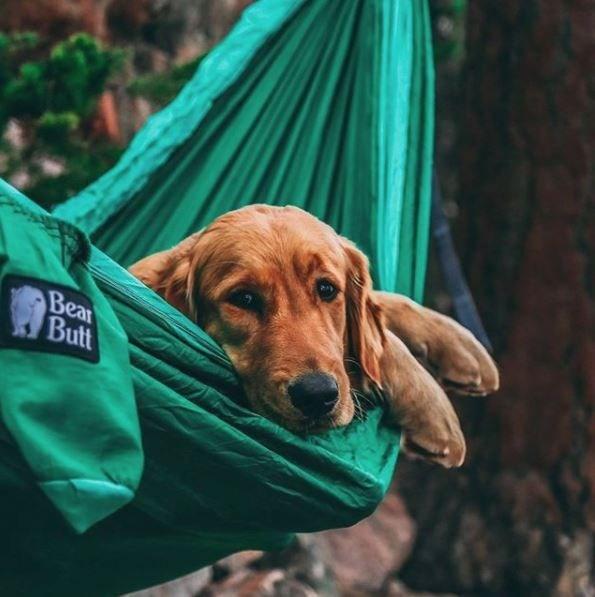 köpeklerle kamp, köpekle kampa gitmek, evcil hayvanlarla kamp