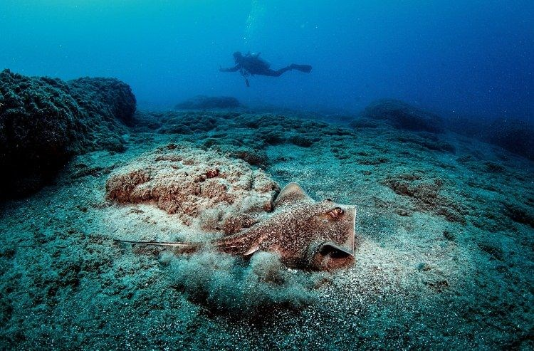 samandağ coast, samandağ underwater tourism, samandağ diving, samandağ underwater, samandağ scuba, hatay underwater, red sea