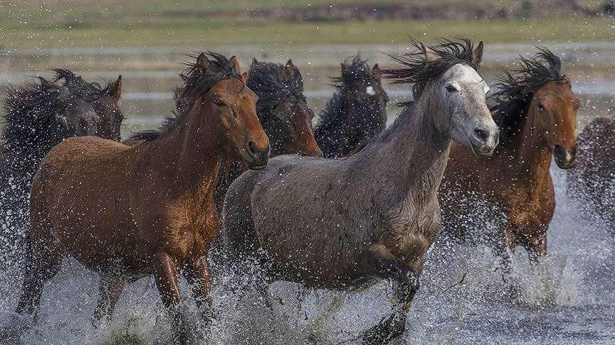 yılkı atları, erciyes, fotoğrafçılık, yılkı atları nerede bulunur