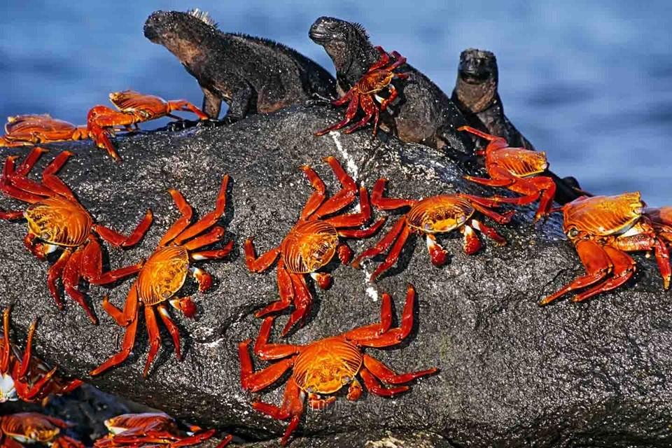 galapagos adaları, galapagos adaları nerede, galapagos adaları hayvanları, galapagos adaları darwin, galapagos adaları turu