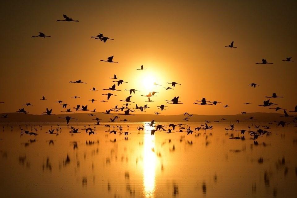 tuz gölü, flamingo, tuz gölü nasıl oluştu, tuz gölü nerede, flamingo kuluçka yerleri, flamingolar nerede