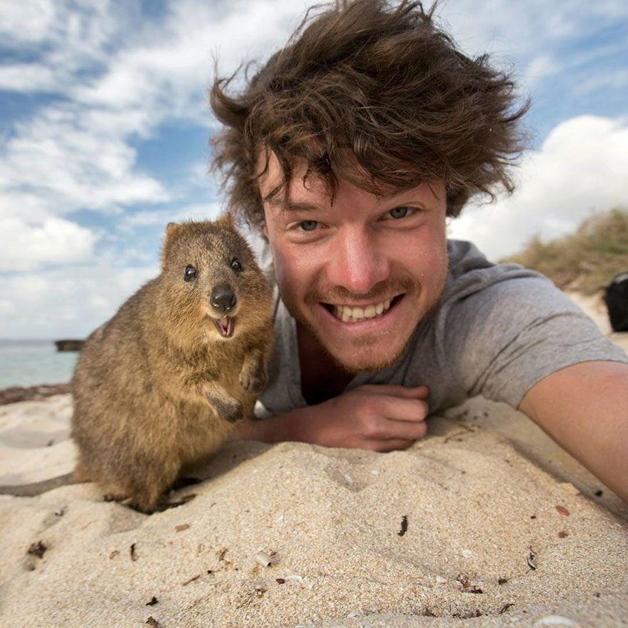 allan dixon, hayvanlar, sevimli hayvanlar, selfie, selfie nasıl çekilir, avustralya, hayvan fotoğrafları, en iyi selfieler
