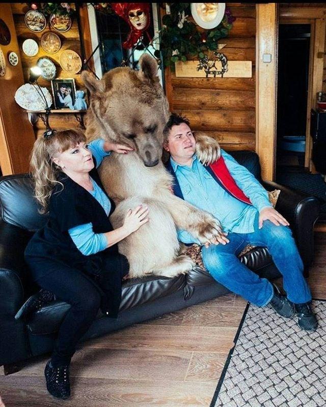 ayı semyon, svetlana yuri pantelenko, fenomen ayı, fenomen hayvanlar, en ünlü ayı