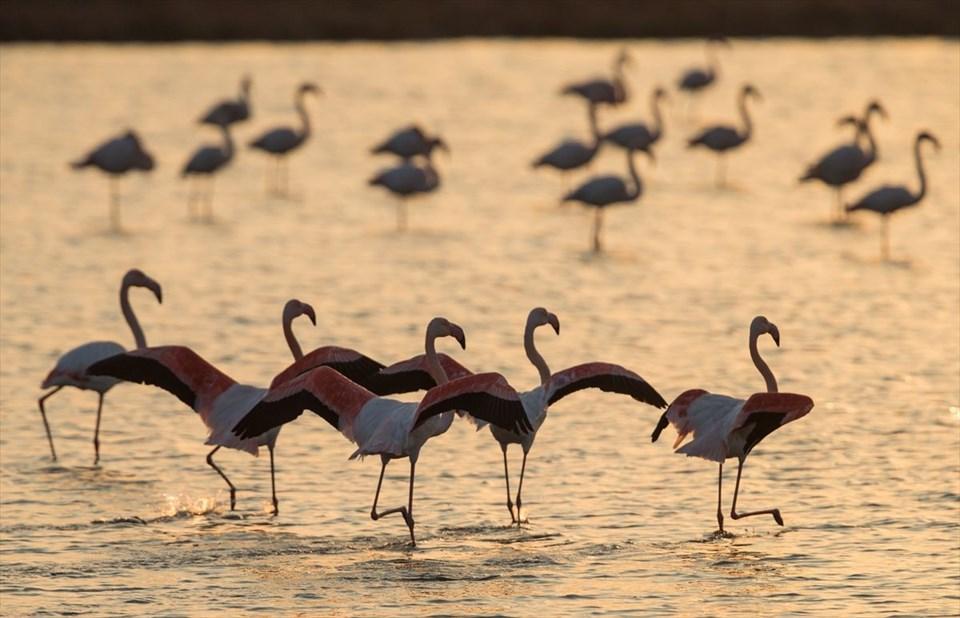 izmir kuş cenneti, gediz deltası, izmir gezilecek yerler, dünyanın en önemli sulak alanları