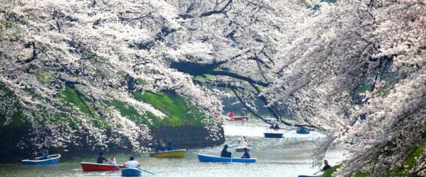 Japonya-Sakura.jpg