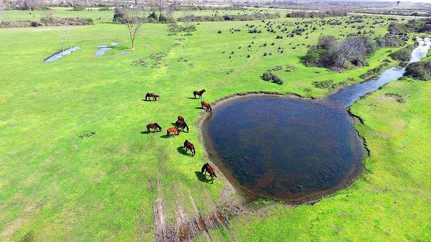 kızılırmak deltası, kızılırmak deltası kuş cenneti, samsun, samsun gezilecek yerler