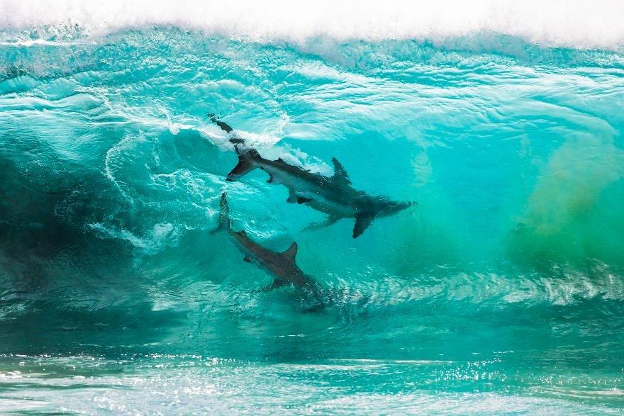 köpekbalığı fotoğrafları, sörf köpekbalığı, sörfçüler, red bluff sahili