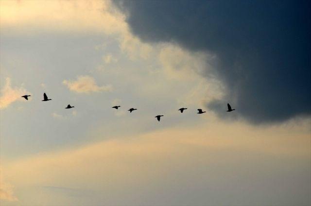 muş ovası, muş gezilecek yerler, kuşların göç güzergahları