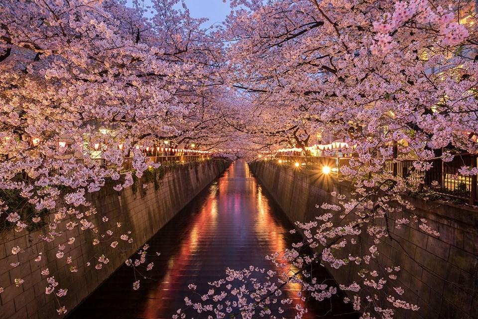Ağaç tünelleri, çiçek tünelleri, Çiçek turizmi, Doğa, Doğa turizmi, doğal tüneller, İngiltere, İrlanda, Japonya, Orman, Seyahat