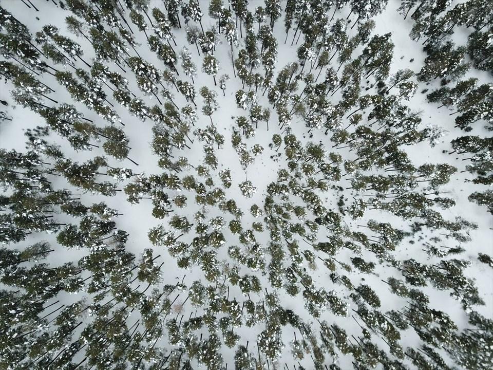 sarıkamış, kars, sarıçam ormanları, sarıkamış cıbıltepe kayak merkezi