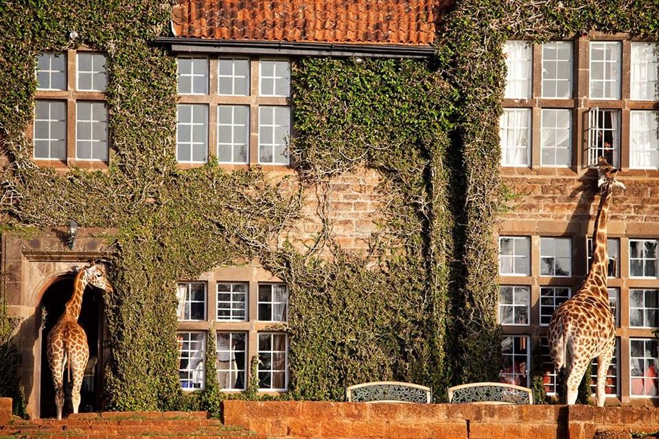 dünyanın ilk robot oteli, henn-na hotel, jules undersea lodge, the treehotel, giraffe manor, kakslauttanen