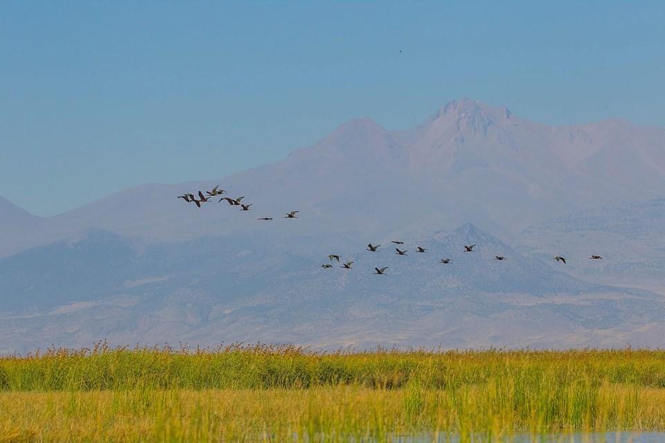 sultan sazlığı, sultan sazlığı milli parkı, kuş cenneti