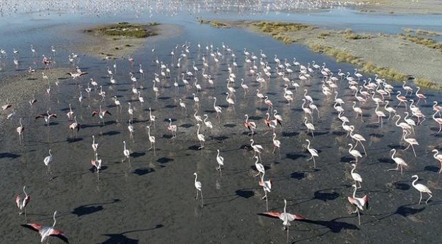 tuz gölü, flamingo, kuluçka, türkiye'de flamingolar nerede bulunur