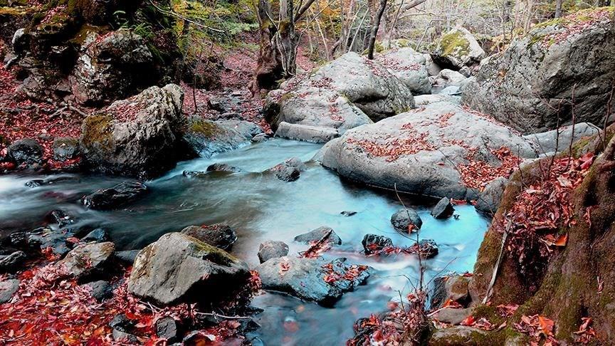 yalova, yalova city forest, encouragement, çınarcık, yalova autumn photos