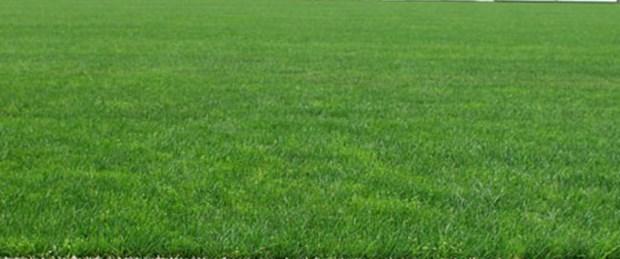 19 Mayıs Stadı yeniden doğal çim