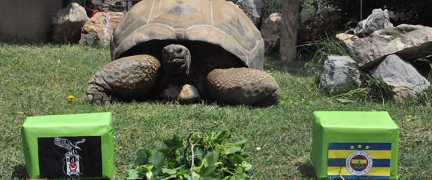 kaplumbağa tuki derbi tahmin.jpg