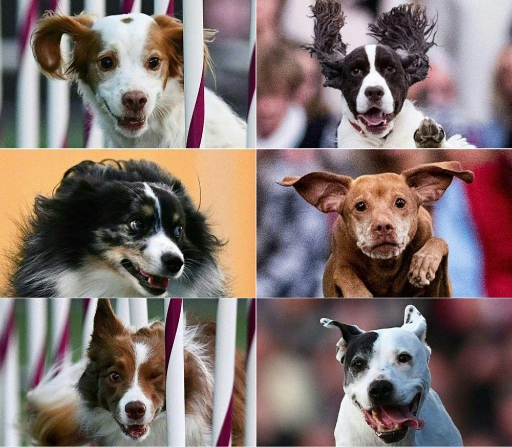 Köpek adları da corona virüsten etkilendi - 4