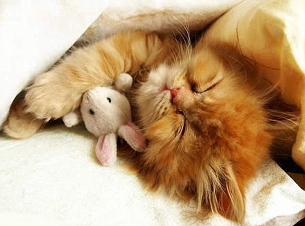 Картинки с животными доброе утро любимая
