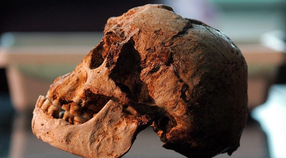 Bu alandaçalışan başka bir araştırmadaHomo sapiens dışında kalan bir türün 18 bin yıl gibi erken bir tarihe kadar hayatta kalamayacağınıiddia edilmişti.