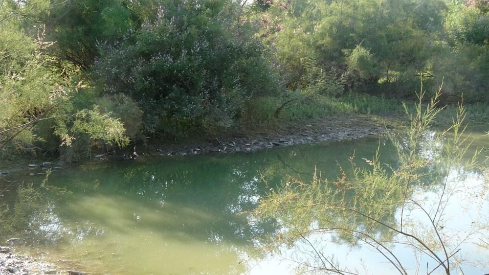 Manavgat'ta balık ölümleri - 5
