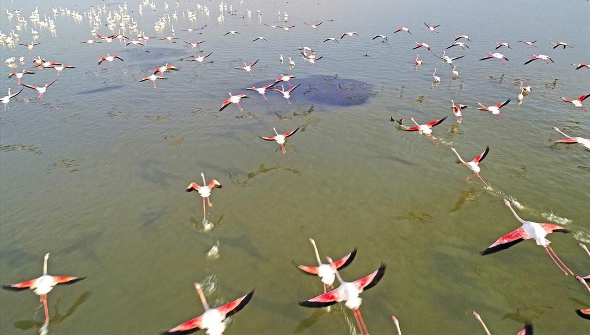 Adana'da göçmen kuşların uğrak durağı: Çukurova Deltası